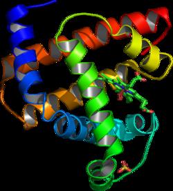 250pxmyoglobin1